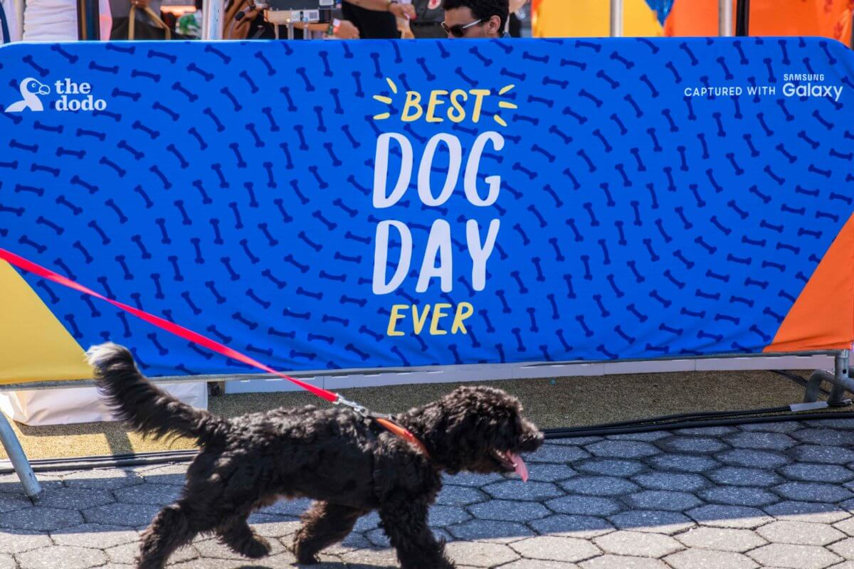 The Dodo   Best Dog Day Ever
